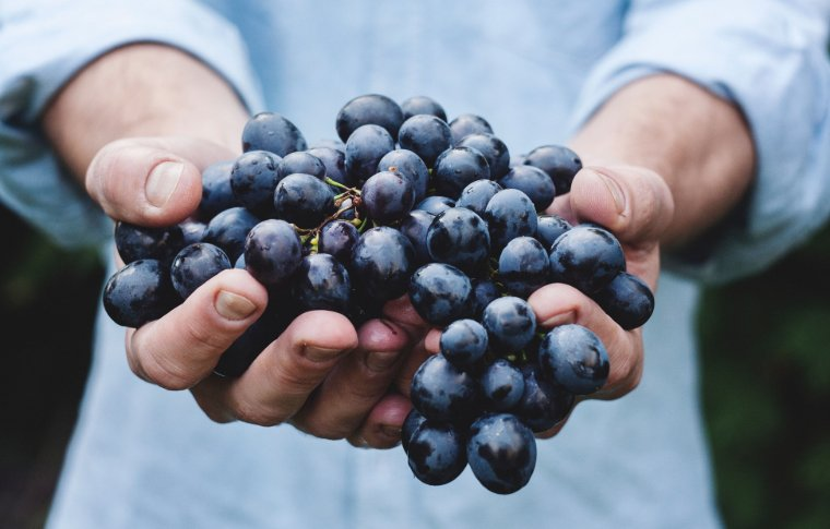 outstretched hands holding a bunch of red grapes