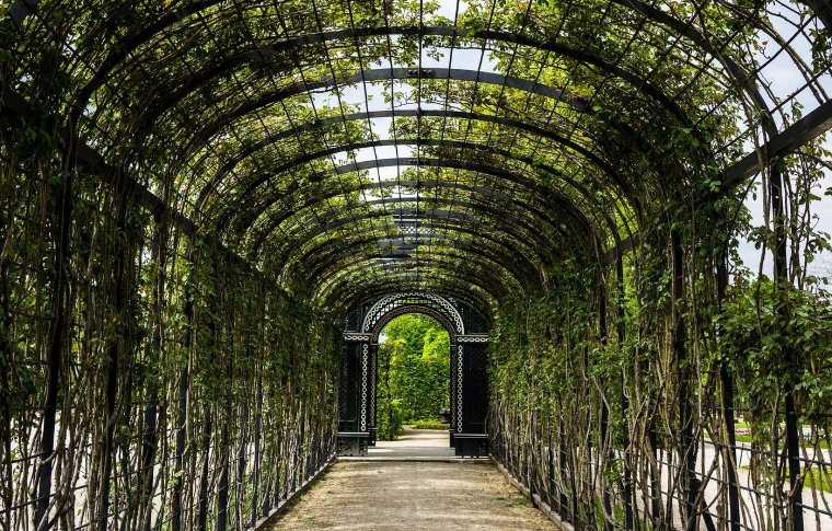 outdoor tunnel with vines growing around