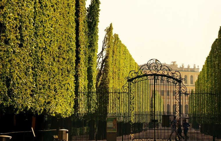large gate with tall hedging on either side