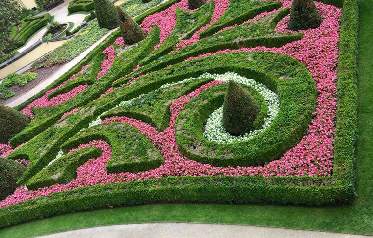 garden with hedges and pink flowers in curated pattern