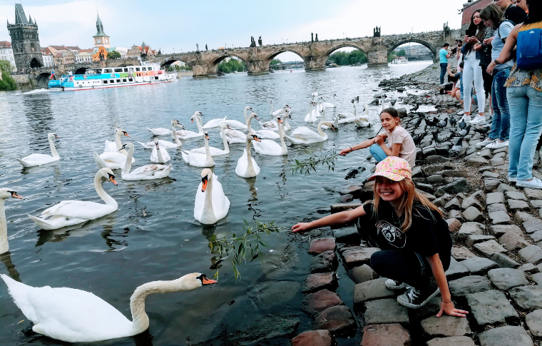 two girls feeding swans on the river bank in Prague
